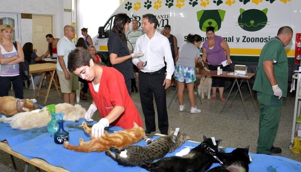 Continúan en Longchamps los operativos de castración gratuita de perros y gatos